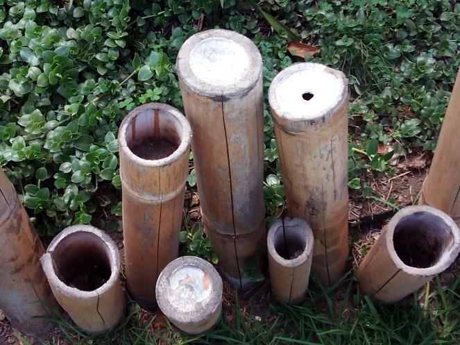 bambu-jardin-botanico-quito