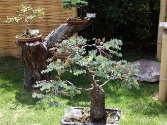 bonsais-jardin-botanico-quito-2