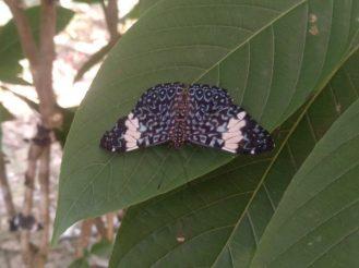 mariposa-butterfly-amazonia-1-ecuador