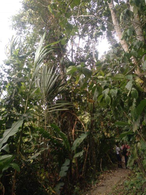 selva-amazonica-ecuador