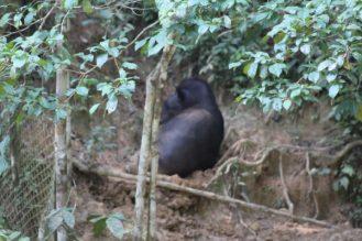 tapir-ecuador-amazonia