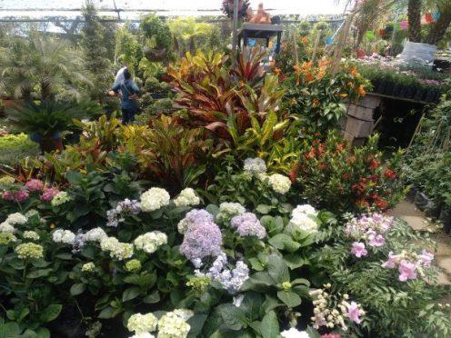 plantas-plants-ecuador-1-nayon